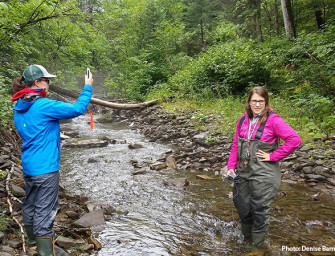 The importance of thermal refuges for Salmon